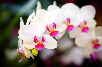 Orchid Beauty Art Print by Tammy Smith