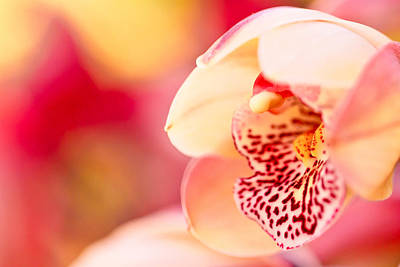 Photograph - Orchid  by Ben Graham