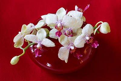 Photograph - Orchid Center Piece by Paul Indigo