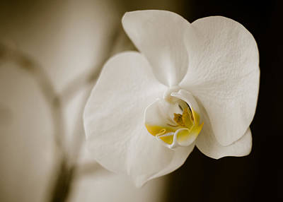 Orchid Art Print by Ivelin Donchev