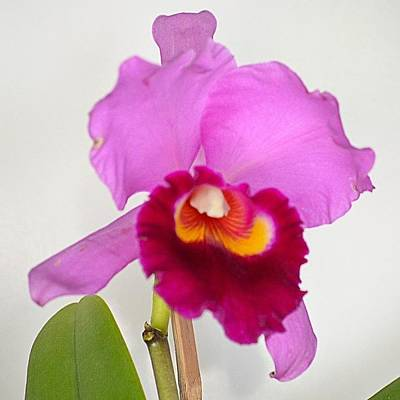 Orchids Photograph - #orchid  Of The Day by Simeao Veras