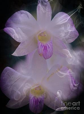 Kathleen Photograph - Orchid Ruffles by Kathleen Struckle