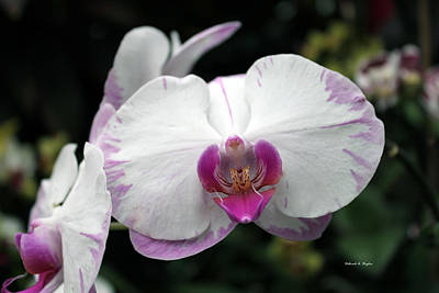 Photograph - Orchid Wonder by Deborah Hughes