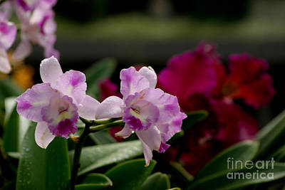 Photograph - Orchid World by Living Color Photography Lorraine Lynch