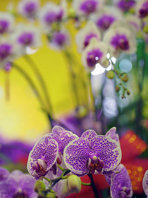 Taipei Photograph - Orchids For Sale At A Market In Taipei by David H. Wells