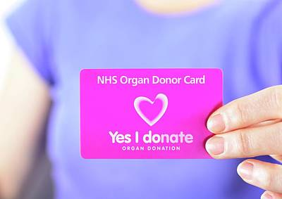 Altruism Photograph - Organ Donor Card by Cordelia Molloy
