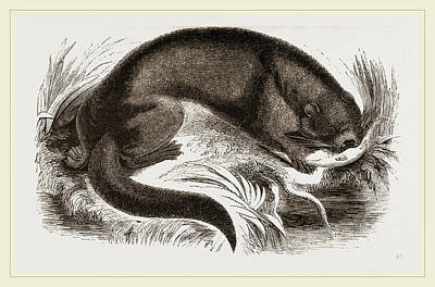 Otter Drawing - Otter by Litz Collection