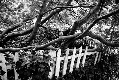 Photograph - Overflowing A Picket Fence by Cora Wandel