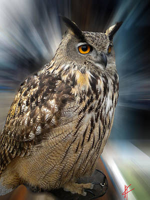 Owl Alba Spain  Art Print