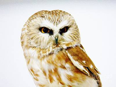 Photograph - Owl by Judy Via-Wolff