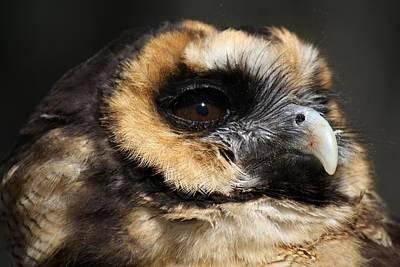Owl Art Print by Paulette Thomas