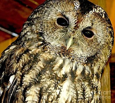 Scifi Portrait Collection - Owl - Strix Aluco by Nikitta Noa