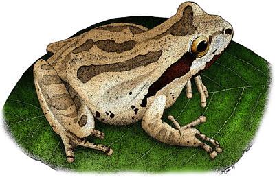 Pacific Chorus Frog Art Print