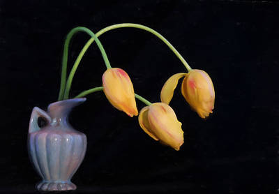 Photograph - Painted Tulips by Mary Buck