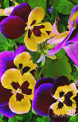 Digital Art - Painterly Purple Pansy by Peter Piatt