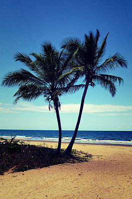 Mountain Landscape Royalty Free Images - Pair of coconut trees Royalty-Free Image by Girish J