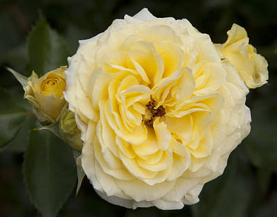 Photograph - Pale Yellow by Masami Iida