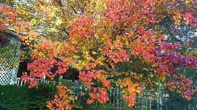 Photograph - Pallette Of Fall Colors by Kenny Glover