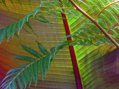 Photograph - Palm And Fern Leaves by Duane McCullough