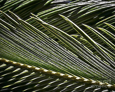 Photograph - Palm Fronds 8653 by Walt Foegelle