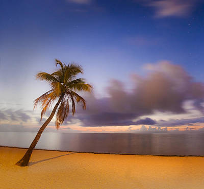 Photograph - Palm by Scott Meyer