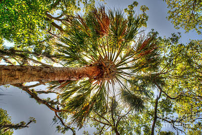 Photograph - Palm Splendor by Dale Powell
