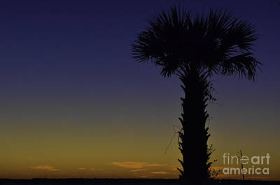 Photograph - Palm Sunset by Dale Powell