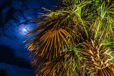 Photograph - Palm Tree At Night Near Hotel by Alex Grichenko