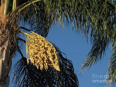 Photograph - Palm Tree Flower by Chani Demuijlder