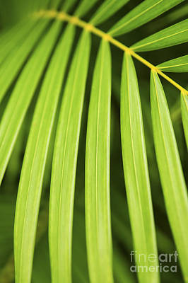 Natural Background Photograph - Palm Tree Leaf by Elena Elisseeva