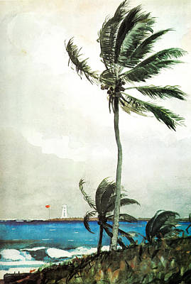 Stream Painting - Palm Tree Nassau by Celestial Images