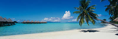 South Pacific Photograph - Palm Tree On The Beach, Moana Beach by Panoramic Images