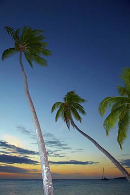 Palm Trees And Sunset, Plantation Art Print by David Wall