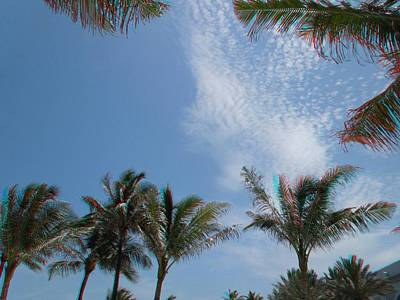 Photograph - Palm Trees In 3d by Ron Davidson