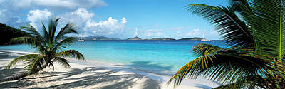 Palm Trees On The Beach, Us Virgin Art Print by Panoramic Images