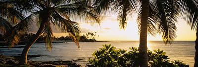 Palm Trees On The Coast, Kohala Coast Art Print by Panoramic Images