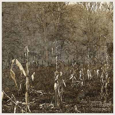 Photograph - Paltry Harvest by John Stephens