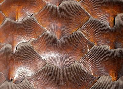 Anteater Photograph - Pangolin Scales by Paul D Stewart