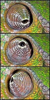 Trio Photograph - Panther Chameleon Eye by Alex Hyde