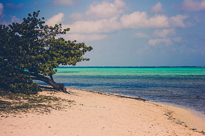 Photograph - Paradise Cove by Sara Frank
