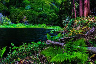 Photograph - Paradise by Edgar Laureano