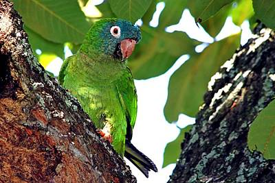 Photograph - Parakeet In The Park by Ira Runyan