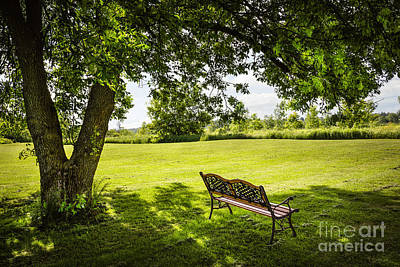 Park Bench Under Tree Art Print by Elena Elisseeva