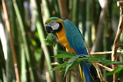 Impressionist Landscapes - Parrot Animals of Audubon Zoo New Orleans Louisiana  by Sean Gautreaux