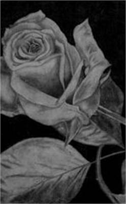 Roses Drawings - Passion  by Jessica Stewart