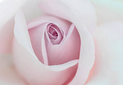 Photograph - Pastel Pink Rose Flower by Jennie Marie Schell