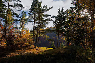 Photograph - Path In Autumn Light by Bogdan M Nicolae