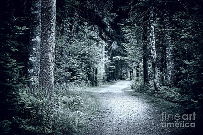 Foreboding Photograph - Path In Dark Forest by Elena Elisseeva