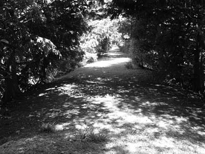 Photograph - Path Through The Woods by Ron Davidson
