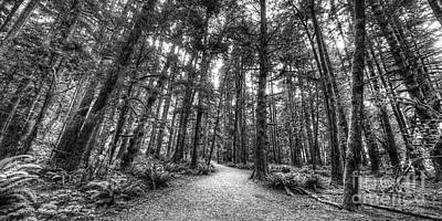 Olympic National Park Photograph - Path To Sol Duc Falls by Twenty Two North Photography
